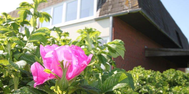 Blumen Haus im Hintergrund